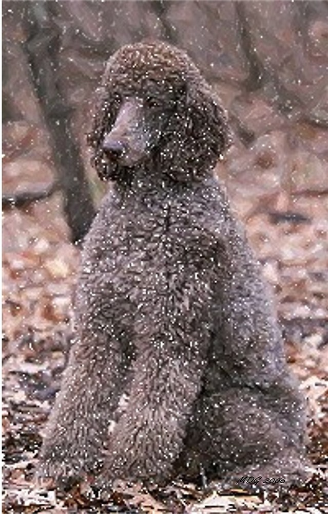 Poodle (Chocolate) Dog by Oldetimemercan