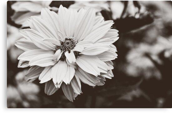 Daisy Flower by henriza115