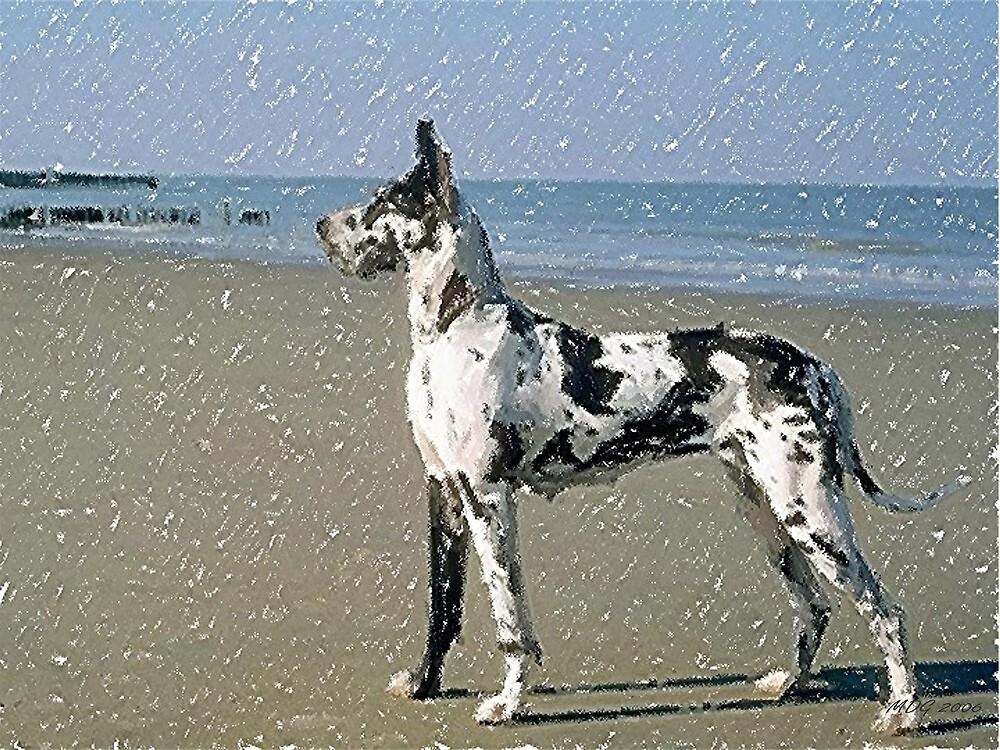 Great Dane Dog On Beach by Oldetimemercan