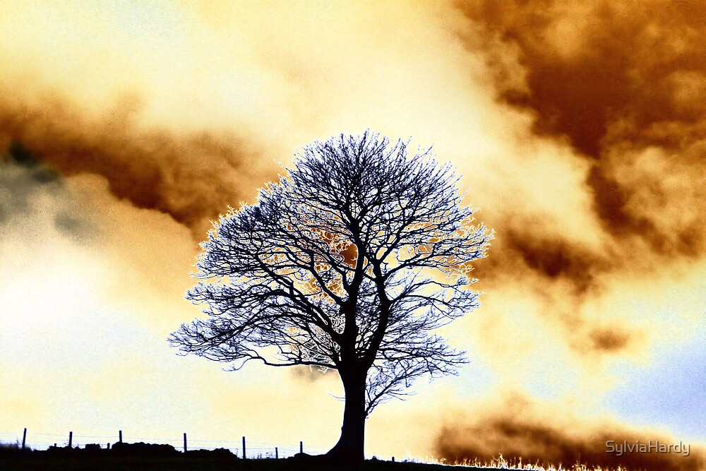 One Fine Tree by SylviaHardy