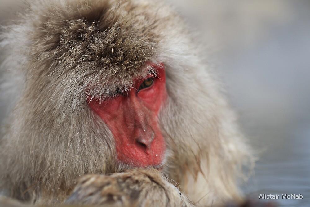 Snow Monkey by Alistair McNab