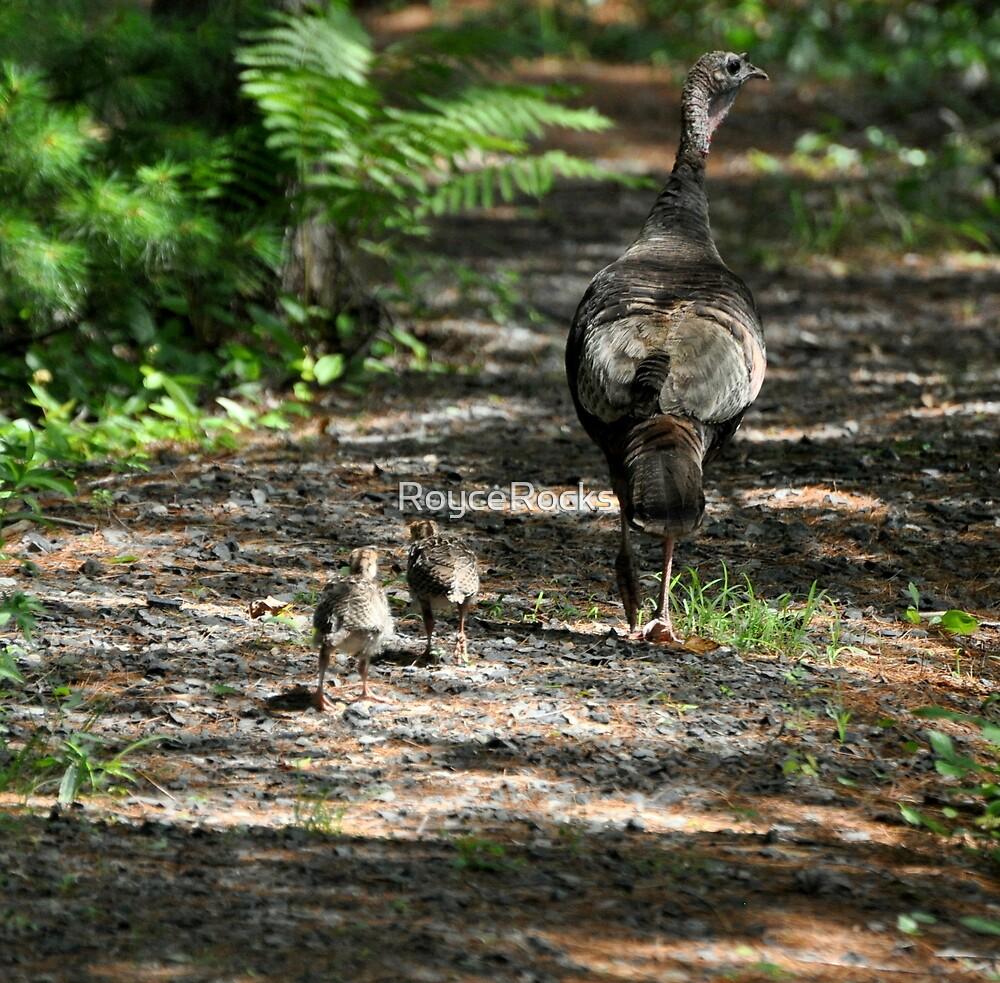 Mama Turkey and Chicks by RoyceRocks