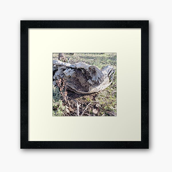 Gough's Range Stump Exposure Framed Art Print