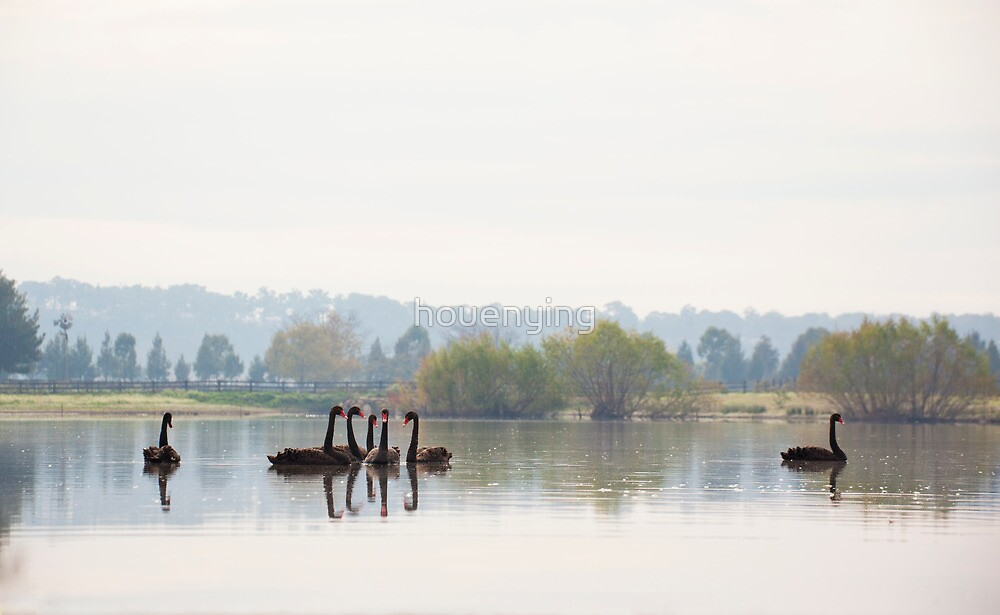 the swan lake by houenying