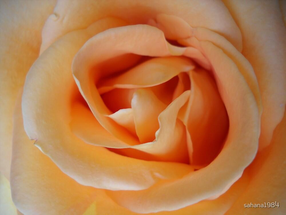 Rose by sahana1984