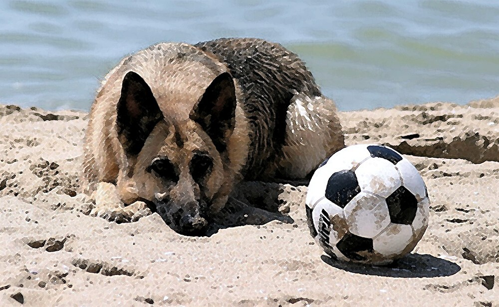 German Shepherd Dog With Soccer by Oldetimemercan