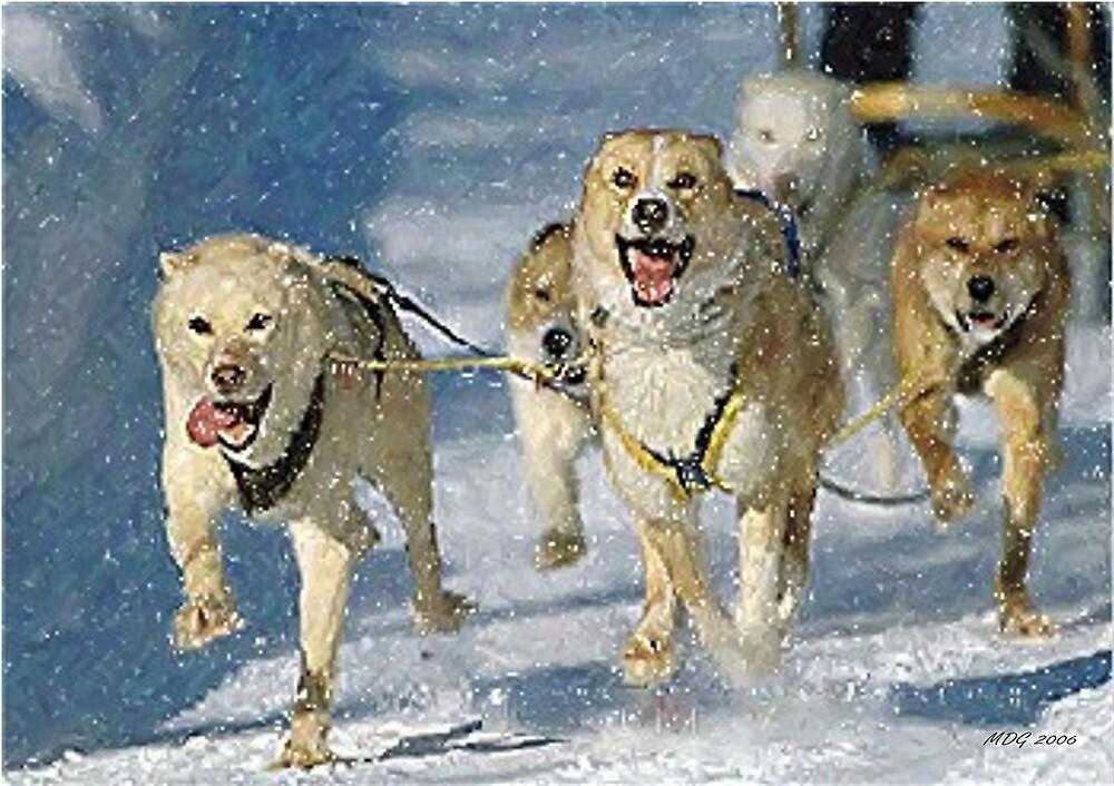 Alaskan Sled Dog by Oldetimemercan