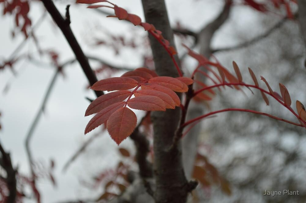 Autumn Leaves by Jayne Plant