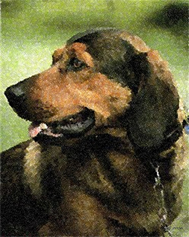 Alpine Dachsbracke Dog by Oldetimemercan