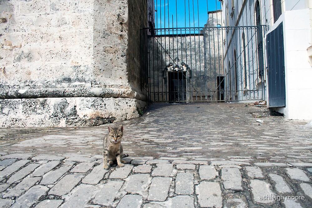 Havana kitty by ashleigh moore