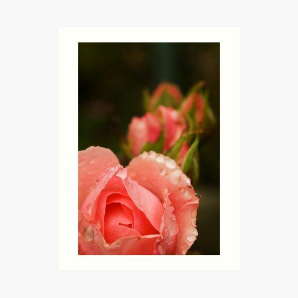 Pink roses in the rain Art Print
