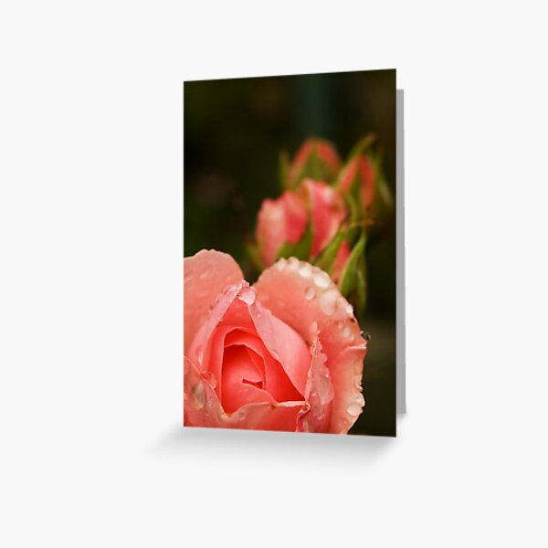 Pink roses in the rain Greeting Card