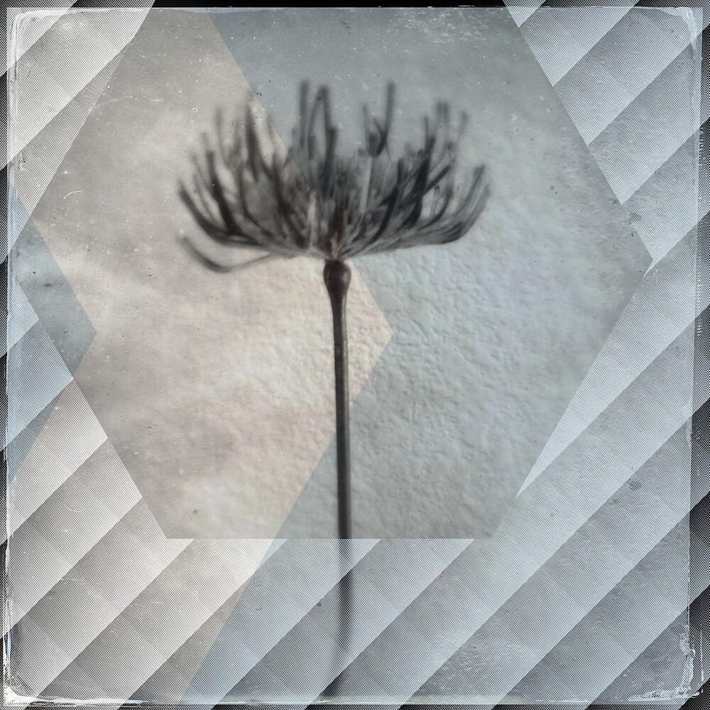 Dandelion by Jenbeez