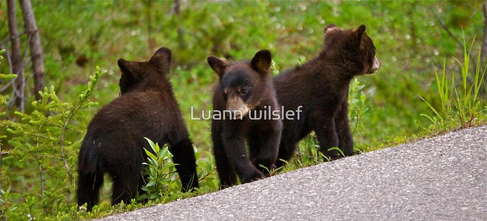 Bear Cubs by Luann wilslef