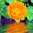 1713-orang flowers by elvira1