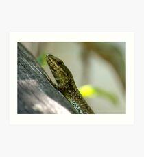 small lizard Art Print