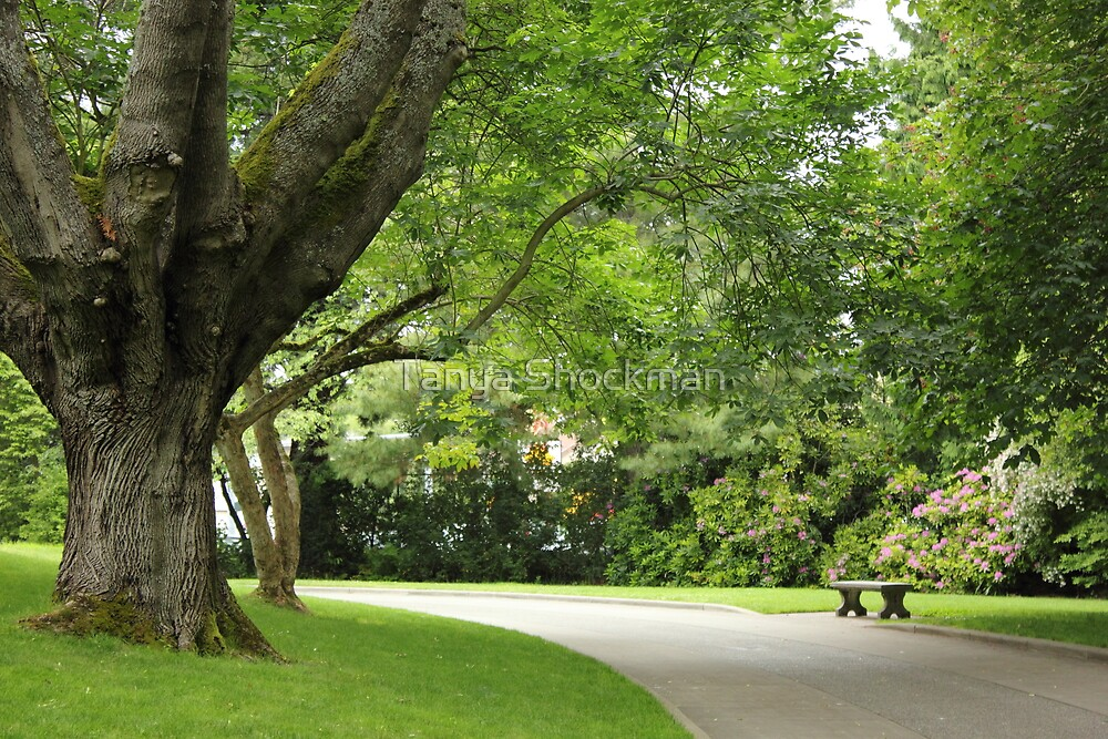 Daydreamer's Garden by Tanya Shockman
