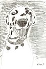 Dotty in Pencil by Jay Reed