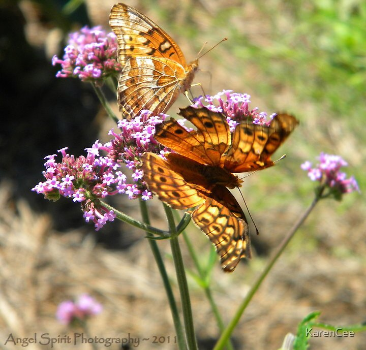 The Butterfly by KarenCee