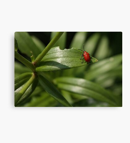 Standing Out On A Leaf Canvas Print