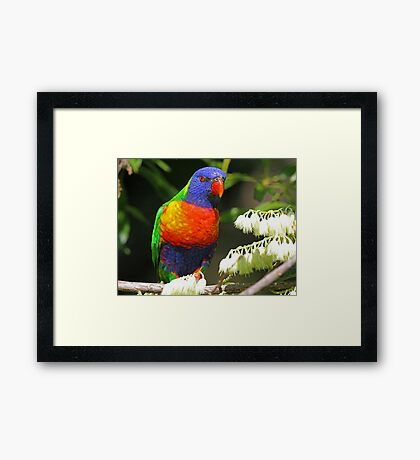I have all the colors of the rainbow! Framed Print