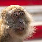 Cheeky Monkey by MunschkinMedia