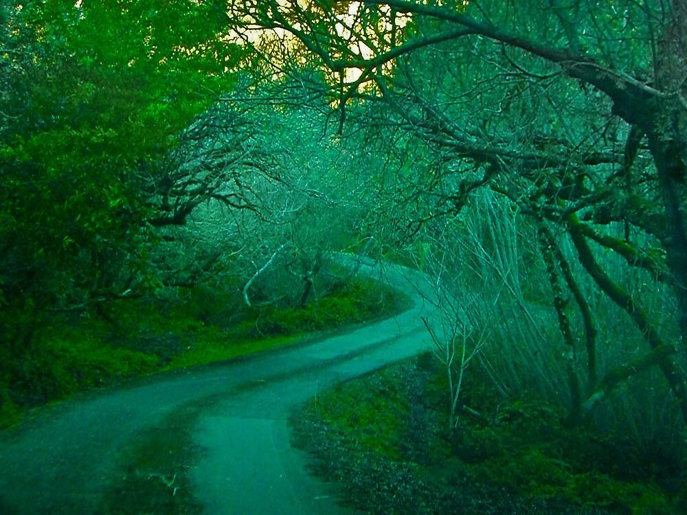 California Coastal Mountain Road by David Denny