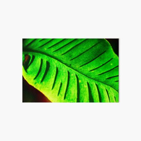 Leaf in Tropical Green Art Board Print