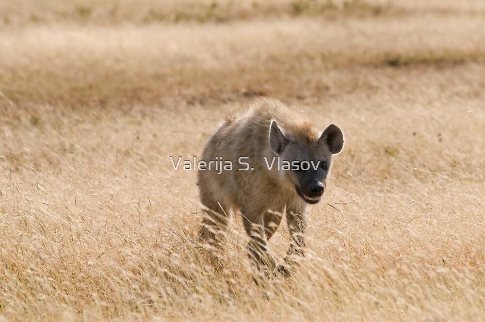 Female spotted hyena by Valerija S.  Vlasov