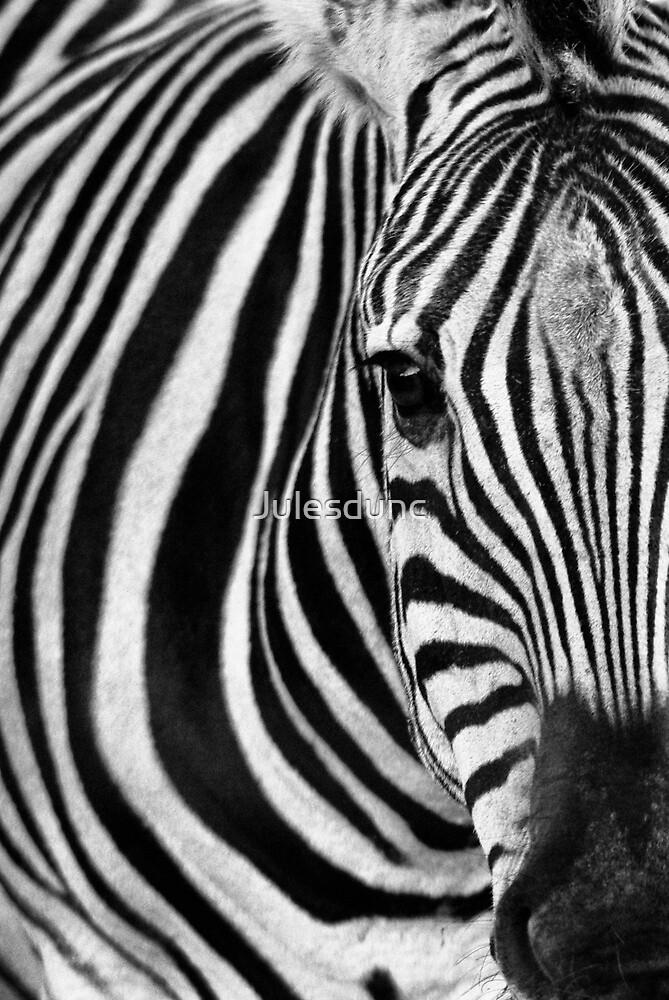 B & W zebra by Julesdunc