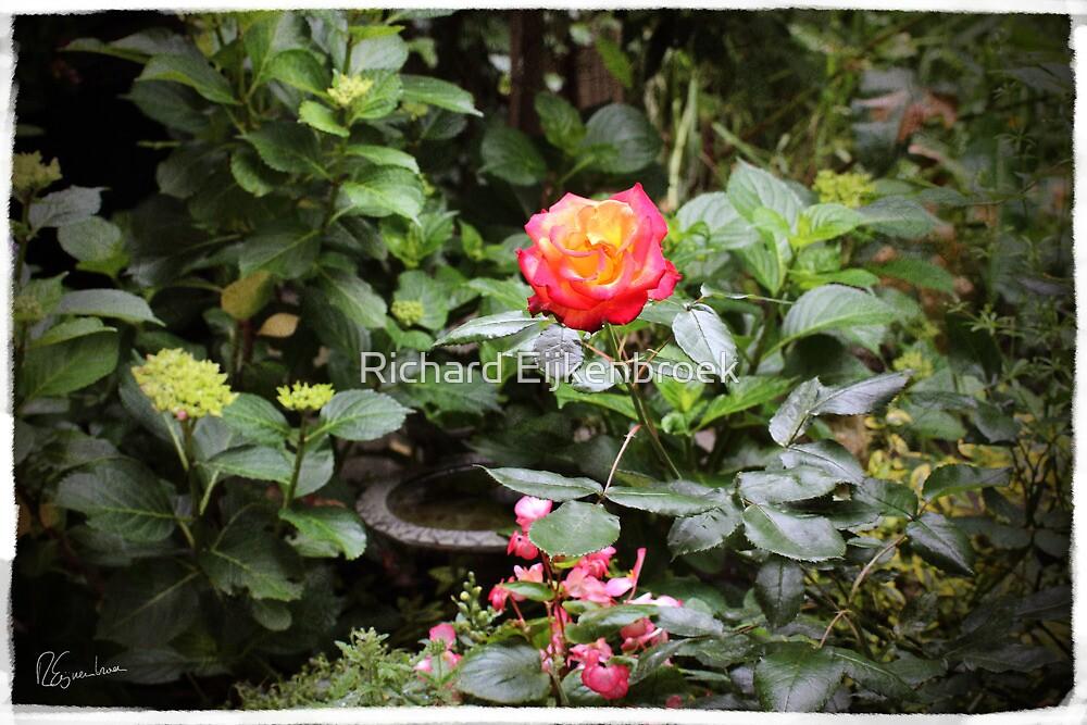 Where the wild roses grow by Richard Eijkenbroek