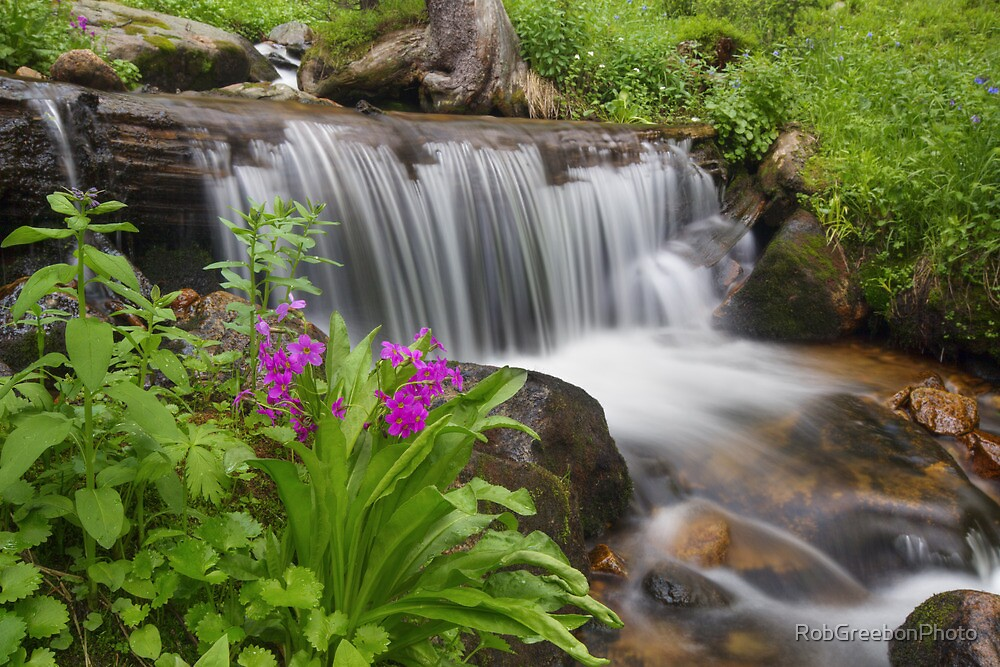 Colorado Wildflowers - Small Waterfall and Wildfloewrs on Berthoud Pass by RobGreebonPhoto