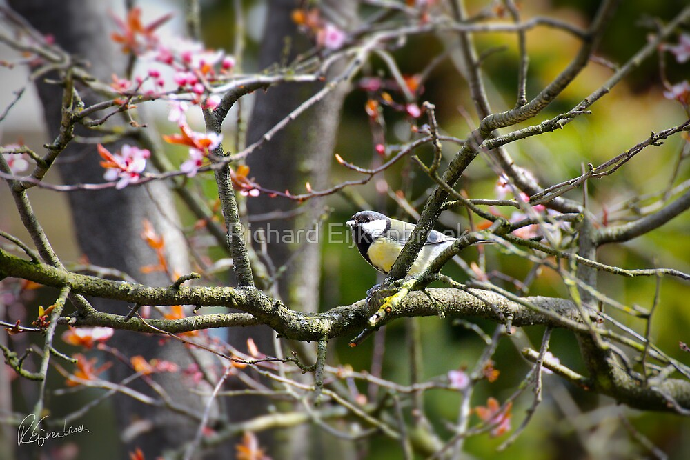 The little bird in the blossom tree by Richard Eijkenbroek