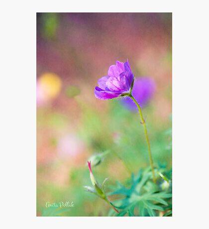 Proud Purple Cranesbill Photographic Print
