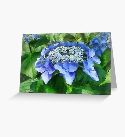 Blue Lace Cap Hydrangea Let's Dance Starlight Greeting Card