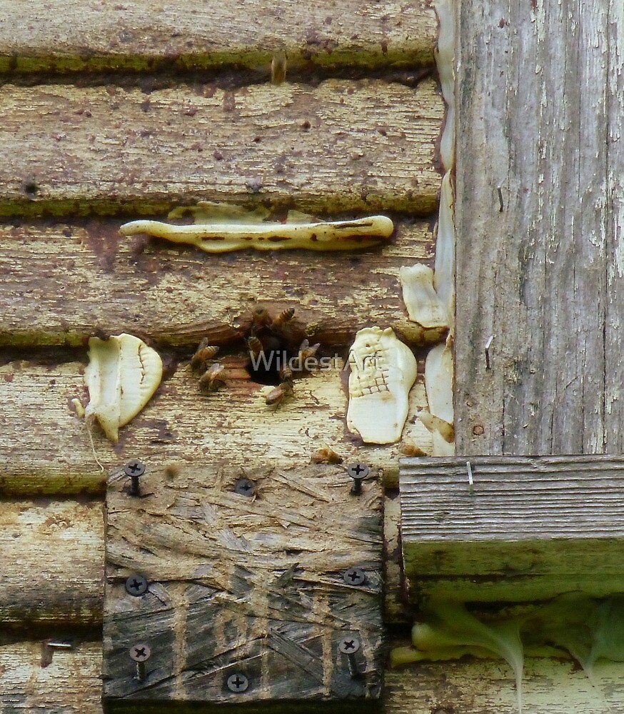 Bee Hive In The House by WildestArt