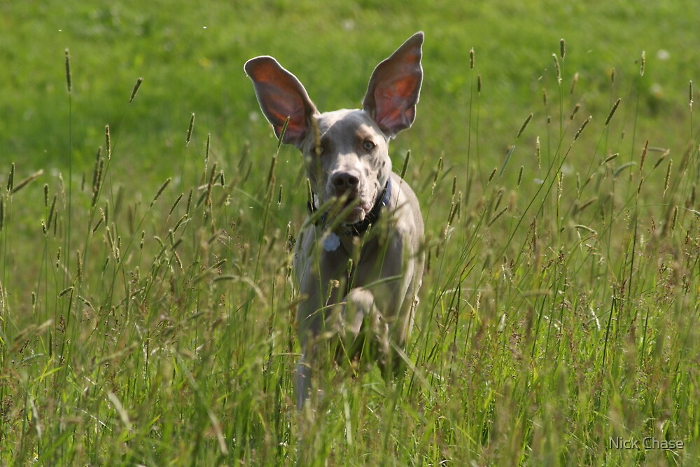 Ears! by Nick Chase