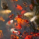 Feeding Frenzy by David Davies