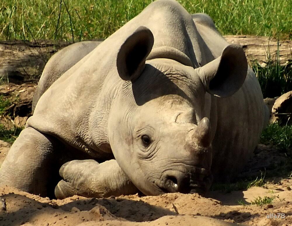 Baby Rhino  by alfa78