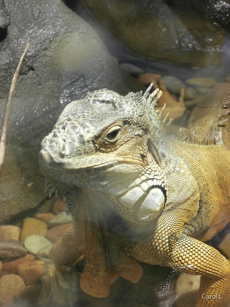 Iguana Beauty by Carol L