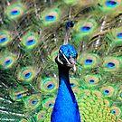 Colourscape by dgscotland