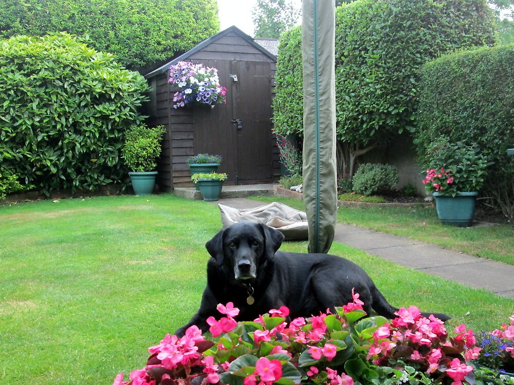 my dog jake smelling the flowers by margaret hanks