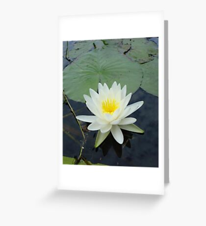 WATERLILY - NYMPHAEA ODORATA  Greeting Card