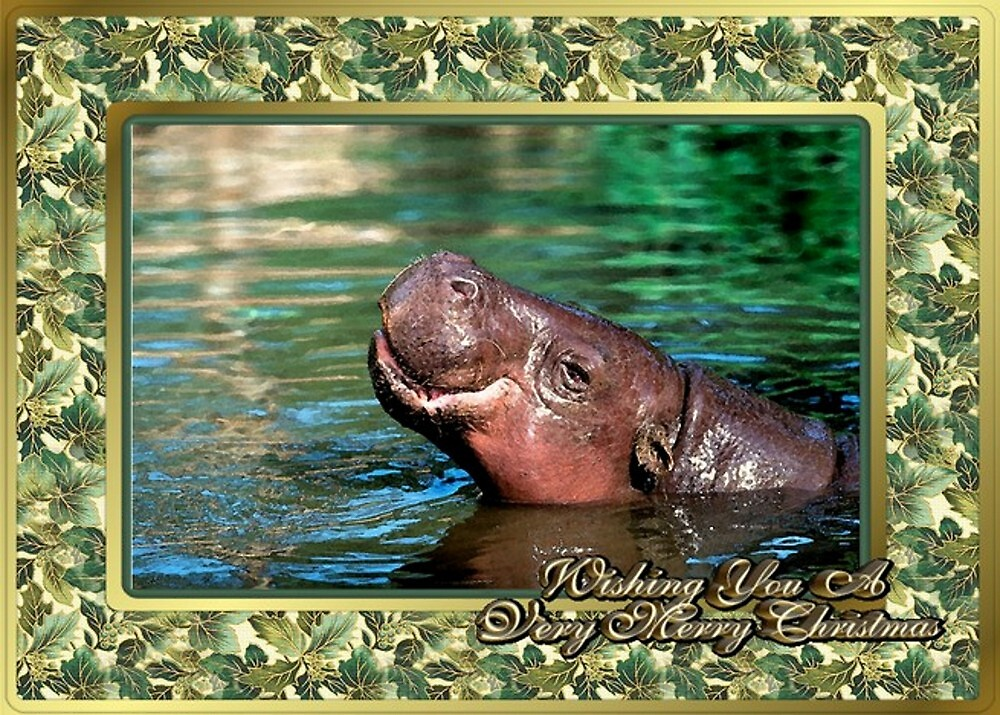 Hippopotamus Blank Christmas Greeting Card by Oldetimemercan
