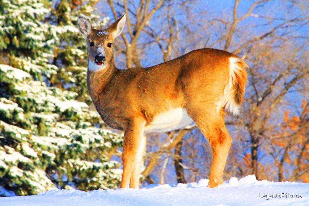 Winter Deer by LegaultPhotos