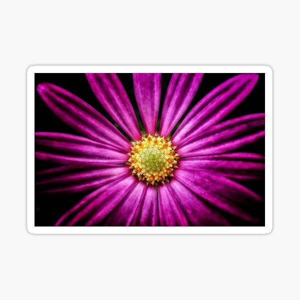 Purple Cosmos Sticker
