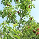 Peach Tree by jroch