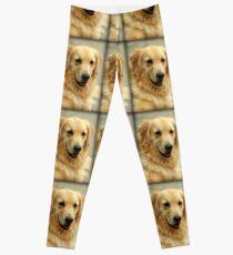 Sweet Golden Retriever Dog Leggings