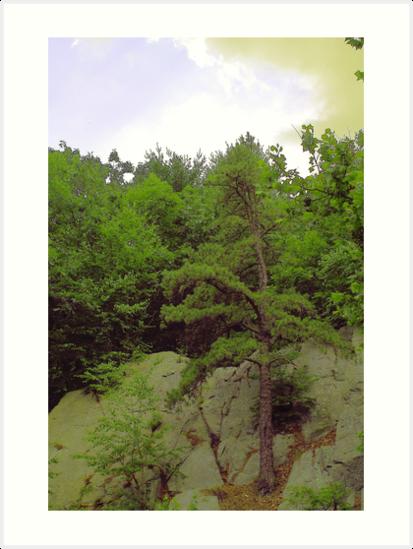 Fishing Tree by jroch