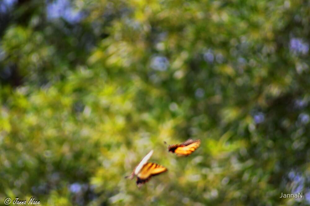 Playful Butterflies  by JannaN